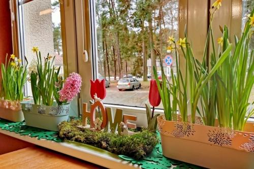Wiosna w Centrum SM
